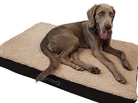 Hervorragend Welches Hundebett für einen alten Hund? ᑕ❶ᑐ Die besten Modelle BW51