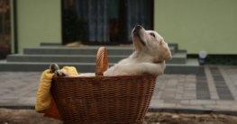 Größe Hundebett für einen Labrador